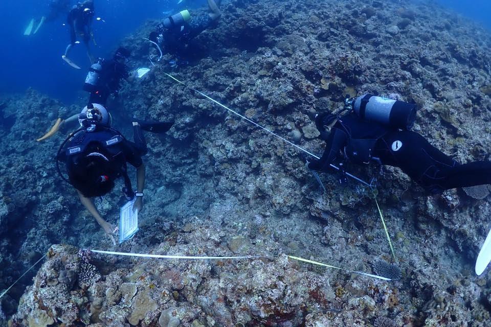 【取材案内】 奄美大島・瀬戸内町のサンゴ礁を守る 瀬戸内町海を守る会が専門家と「リーフチェック」を実施 日時:2020年11月9日(月)〜11日(水) 実施場所:きゅら島交流館